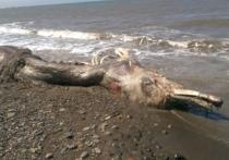 Море выбросило на Сахалине чудище с птичьим клювом и шерстяным хвостом