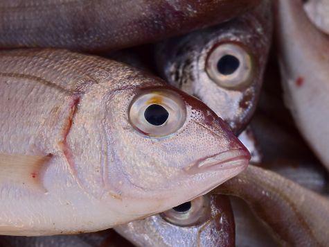 ВРТ cотрудники экстренных служб обнаружили пропавшего наВолге рыбака