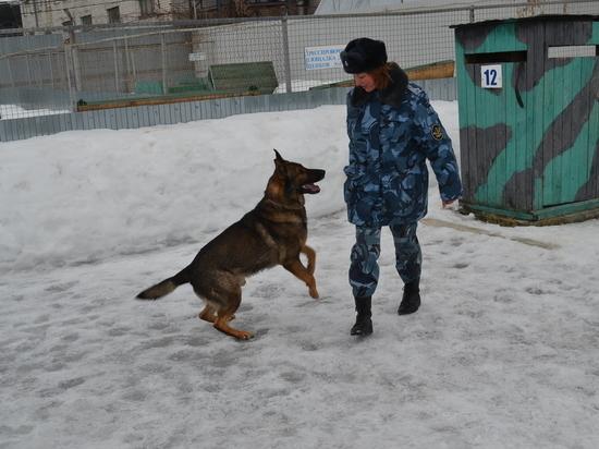 Служебные собаки УФСИН по РТ берут след давностью 5 часов