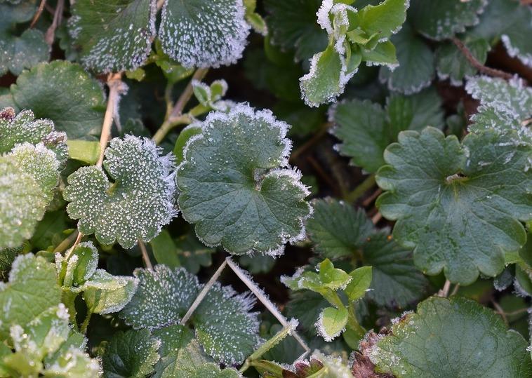 ВТатарстане объявлено штормовое предупреждение, кое-где ожидаются заморозки