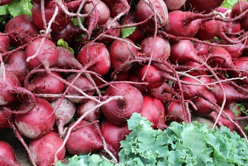 ВТатарстане предполагается рекордный урожай свеклы— до3 млн тонн