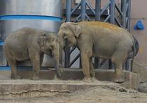 Как встречают «пору любви» жители  Московского зоопарка